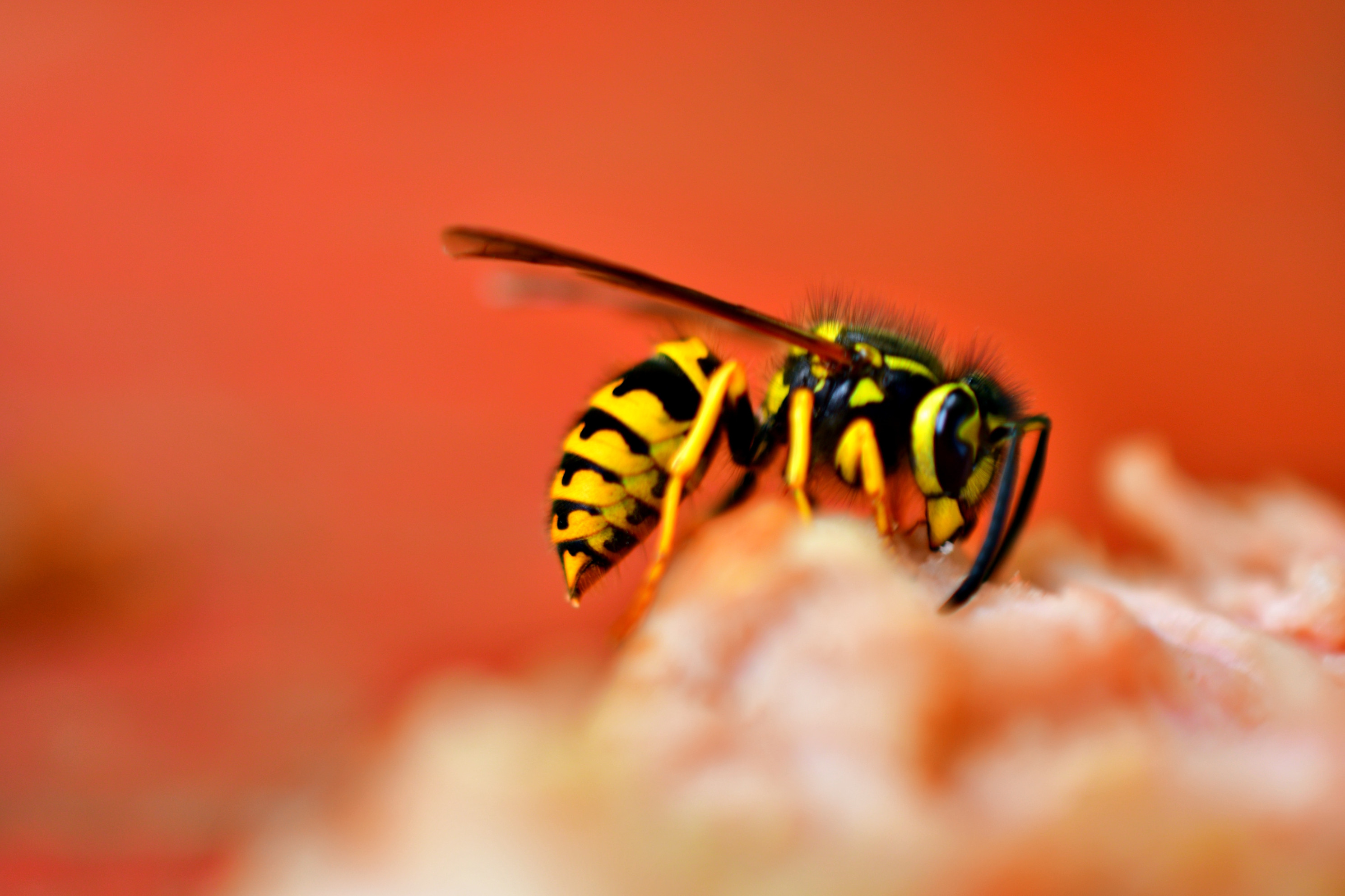 a picture showing a wasp